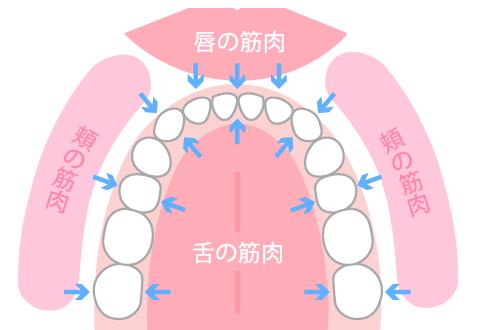 MFT口腔筋機能療法